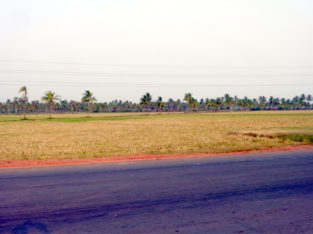 Land For Lease or Sale in Tallarevu Yanam