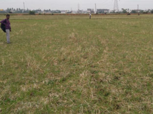 Agriculture Land For Sale at Cheediga, Kakinada