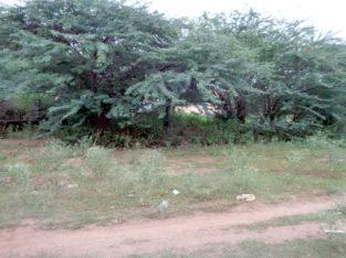 387 Sq Yards Land For Sale at Kathipudi