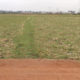 Agriculture Land For Sale at Cheediga, Kakinada
