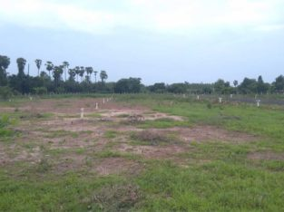 Residential Plots for Sale at Annadevarapeta, Tallapudi