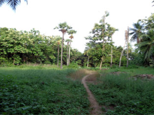 Agriculture Land For Sale at Katrenikona, Mummidivaram