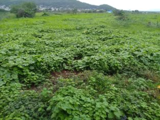 Site for Sale at Vidyadharapuram, Vijayawada