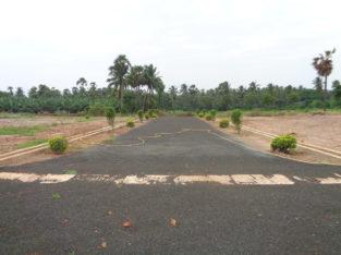 DTCP Plots for Sale at Main Road Someswaram