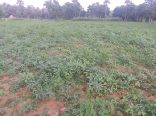 Agricultural Land For Sale Near Mallepalli, Jaggampeta