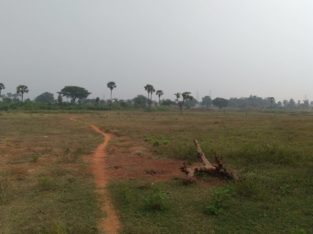 Land For Sale at Pallakadiyam, Rajanagaram