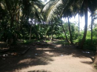 Site For Sale at Gollakottivari Palem, Kothapeta