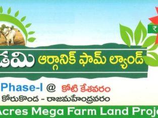 99 Acres Mega Farm Land Project at kotikesavaram, Korukonda, Rajahmundravaram