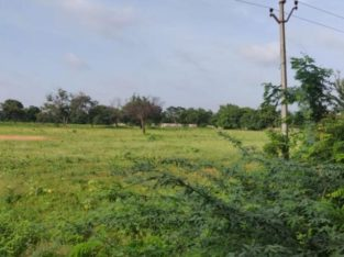 Agricultural Land For Sale Near Edwardpeta, Narasaraopeta