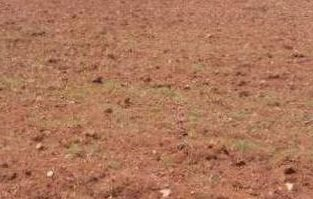 Farming or Agricultural Land For Sale at Nellore, Guntur & Prakasam Districts.