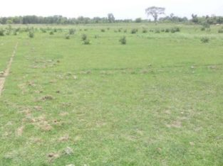 Open Land For Sale at Near X-Roads, Jaityala