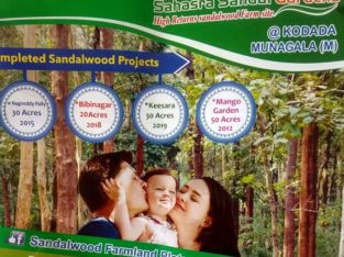 Open Plots for Sale with Sandlawood Plantation at Suryapet, Munagala Mandal