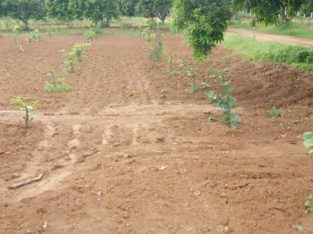 Farm lands in Krishna district low pricess