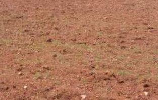 10 Acres Agricultural Land For Sale at Vedadri road, Nandigama