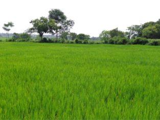 Agricultural Land For Sale at Sri Damargidda Village, Nagalgidda Mandal