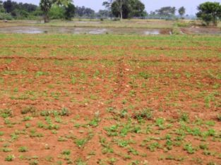 Agricultural Land for Lease at Thirumalayapalem Mandal, Khammam Dist.