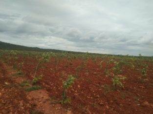Farm Land Plots for Sale at Markapur Road, Garladinne Village, Prakasam Dist