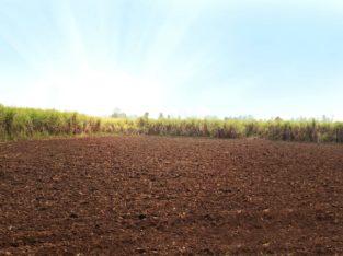 60 Acres Agriculture Land for Sale at Srikakulam.