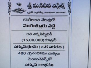 Farm Land Plots for Sale at Mogulluru Kanigiri,Prakasam District