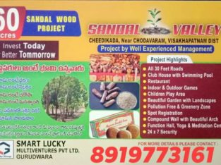 60 Acres Farm Land Plots with Sandalwood Plants For Sale at Cheedikada , Near Chodavaram, Visakhapatnam District.