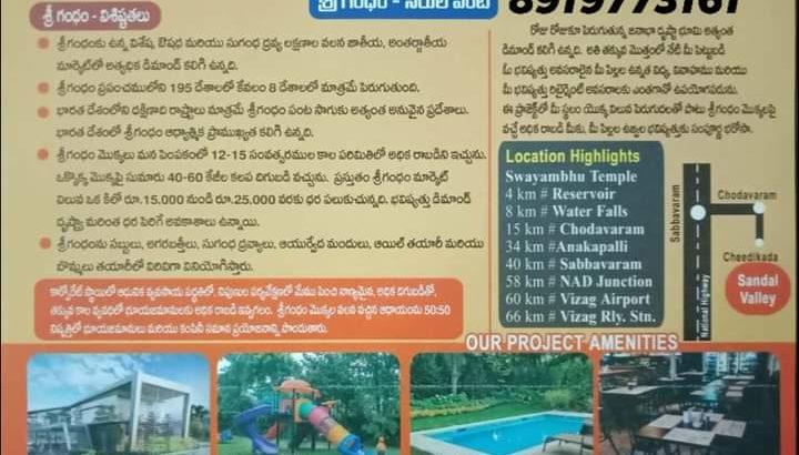 60 Acres Farm Land Plots with Sandalwood Plants For Sale at Cheedikada , Near Chodavaram, Visakhapatnam District.