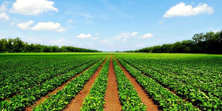 Agriculture Land for Sale at Andhra Pradesh & Telangana