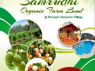 Samrudhi Organic Farm Lands for Sale at Kesaram Village, Bhongiri.