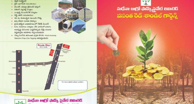 Farm Land with Red Sandal Plants For Sale at Bhoomireddy Village, Prakasam Dist