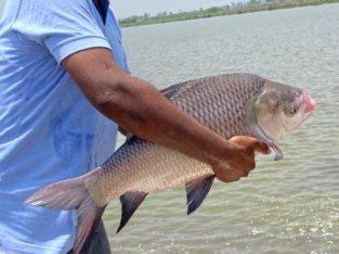 100 Acres Land Lease For Fish or Prawn Farming (Ready For Farming)